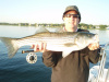 New England striped bass